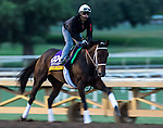 ARCADIA, CA - NOV 01: Forever Unbridled, owned by Charles E. Fipke and trained by Dallas Stewart, exercises in preparation for the Breeders' Cup Longines Distaff at Santa Anita Park on November 1, 2016 in Arcadia, California. (Photo by Zoe Metz/Eclipse Sportswire/Breeders Cup)