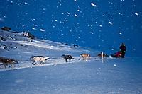 Lance Mackey reaches the actual summit of Rainy Pass as its snowing and blowing 20 mph during the 2010 Iditarod