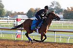 October 23, 2015: Grand Arch, trained by Brian Lynch, and owned by Jim and Susan Hill, is entered in the Breeder's Cup Mile.  Candice Chavez/ESW/CSM