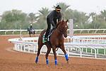 Track Work: February 19 2021: CHARLATAN (USA) Track work from King Abddulaziz Racetrack, Riyadh, Saudi Arabia. Shamela Hanley/Eclipse Sportswire/CSM FEBRUARY 19 2021: The Saudi Cup Preparations.