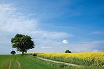 Europa, DEU, Deutschland, Baden-Wuerttemberg, Neckar-Odenwald-Kreis, Odenwald, Mosbach - Reichenbuch, Fruehling, Agrarlandschaft, Raps, Feld, Acker, Rapsbluete, Kategorien und Themen, Landwirtschaft, Landwirtschaftlich, Agrar, Agrarwirtschaft, Erzeugung, Landwirtschaftliche Produkte, Natur, Naturfoto, Naturfotos, Naturfotografie, Naturphoto, Naturphotographie, Landschaft, Landschaften, Landschaftsfoto, Landschaftsfotografie, Landschaftsphoto, Landschaftsphotographie<br /> <br /> [Fuer die Nutzung gelten die jeweils gueltigen Allgemeinen Liefer-und Geschaeftsbedingungen. Nutzung nur gegen Verwendungsmeldung und Nachweis. Download der AGB unter http://www.image-box.com oder werden auf Anfrage zugesendet. Freigabe ist vorher erforderlich. Jede Nutzung des Fotos ist honorarpflichtig gemaess derzeit gueltiger MFM Liste - Kontakt, Uwe Schmid-Fotografie, Duisburg, Tel. (+49).2065.677997, archiv@image-box.com, www.image-box.com]