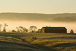 Morning fog in the valley beyond is back-lit by the rising sun, making a dramatic backdrop to the fields and barn at Long Branch Farm, Winchester, Virginia, USA.  © RickCollier.com.