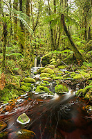 Pristine brown forest stream and green moss on rocks in Oparara Valley, Kahurangi National Park, West Coast, Buller Region, New Zealand