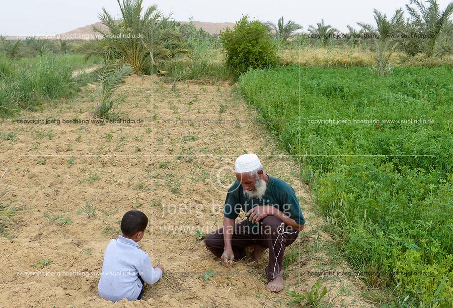 EGYPT, oasis El-Wahat el-Bahariya, desert farming with solar powered pump, field of small scale farmer / AEGYPTEN, Oase Bahariyya, Feld eines Kleinbauern, das mit einer Solar betriebenen Pumpe bewaessert wird