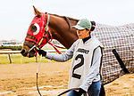 DECEMBER 01, 2018 : #2, Chinomado in the Remsen  Stakes at Aqueduct Racetrack on December 24, 2018 in Ozone Park, NY.  Sue Kawczynski/ESW/CSM