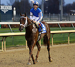 November 27, 2015 Almasty (jockey Jon Court) wins the 12th running of the G3 Commonwealth Turf at Churchill Downs. Owner Rupp Racing Wentworth Brochu, LLC (John Wentworth), trainer Brad H. Cox. By Scat Daddy x Minicolony (Pleasant Colony.) ©Mary M. Meek/ESW/CSM