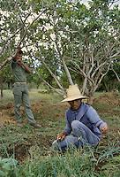 """- prisoners involved with the past regime of the Somoza dictator in an agricultural """"open"""" jail near Managua....- detenuti coinvolti col passato regime del dittatore Somoza in un carcere agricolo """"aperto"""" nei pressi di Managua"""