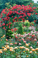 Rose arbor. Oregon Rose Test Garden. Portland. Oregon