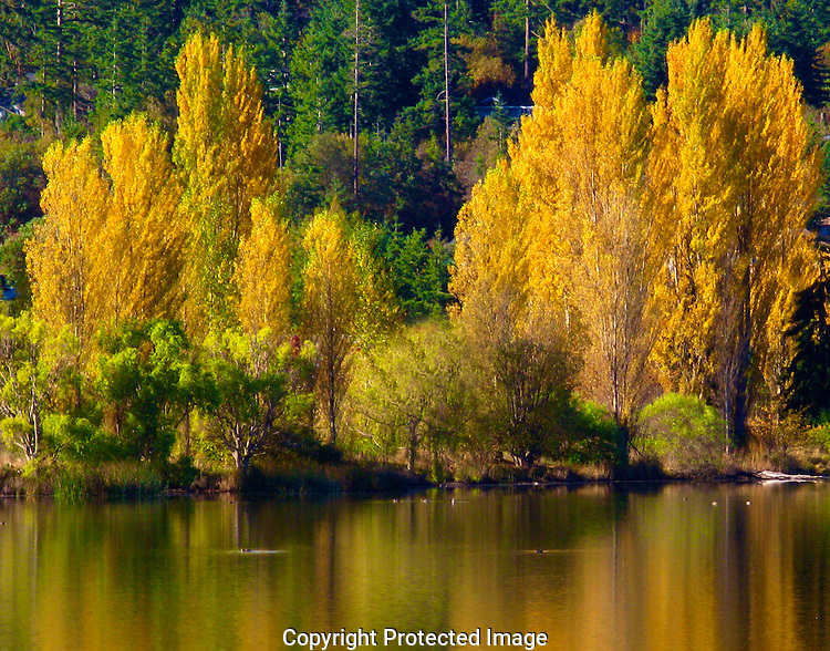 Kah Tai Lagoon in Port Townsend reflects the gold autumnal colors of the season.
