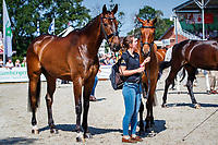 AUS-Kevin McNab's Scuderia 1918 Don QUidam and A Best Friend during the Final Horse Inspection for the Longines CCI5*-L. The Longines Luhmuehlen International Horse Trials. Salzhausen, Germany. Sunday 16 June. Copyright Photo: Libby Law Photography