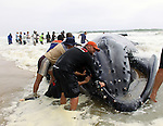 Namibian Whale Rescue
