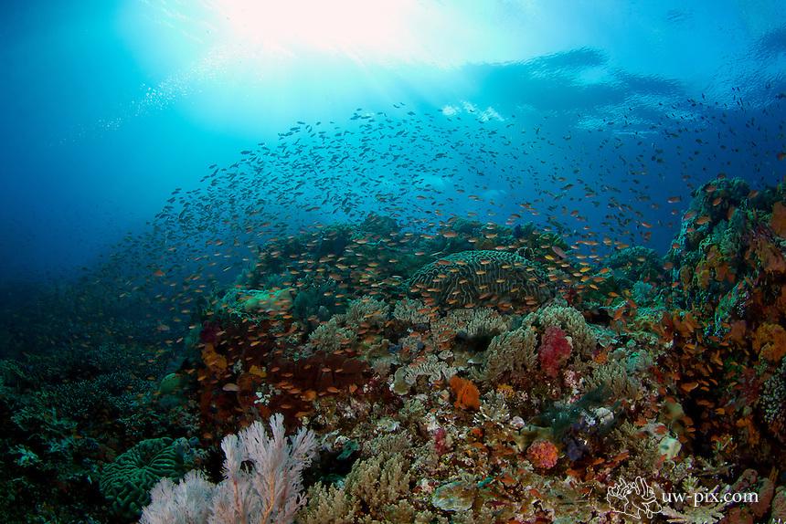healthy reef Komodo National Park