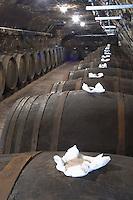 Bung hole with stopper. Oak barrel aging and fermentation cellar. Domaine Huet, Vouvray, Touraine, Loire, France