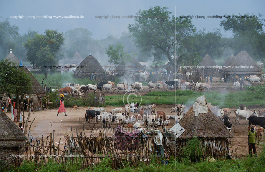 Ethiopia, Gambela, region Itang, village of ethnic group Nuer, cows in cattle camp in the evening / AETHIOPIEN, Gambela, Region Itang, Ethnie NUER, Dorf abends, Rinder kommen vom Weideland