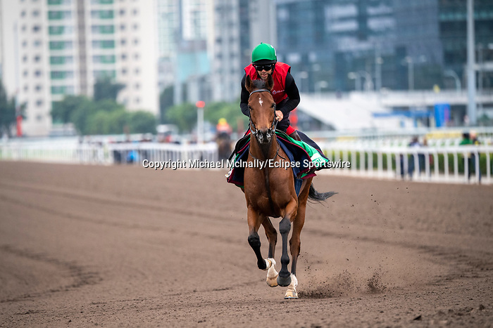 SHA TIN, HONG KONG – December 5:Aspetar at trackwork on December 5 at Sha Tin Race Course in Hong Kong before starting in the Longines Hong Kong Vase. Michael McInally/Eclipse Sportswire/CSM