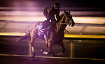 October 31, 2020: Into Mystic, trained by trainer Brendan P. Walsh, exercises in preparation for the Breeders' Cup Turf Sprint at  Keeneland Racetrack in Lexington, Kentucky on October 31, 2020. Alex Evers/Eclipse Sportswire/Breeders Cup
