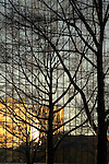 Tree Silhouette, Reflected in Building