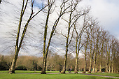 Winter trees in Waterlow Park, Highgate