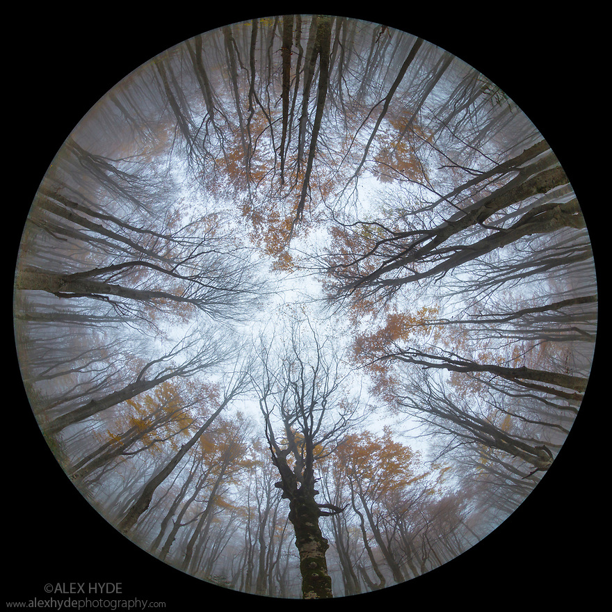 Looking up at the canopy of a Beech woodland {Fagus sylvatica} in autumn through a circular fisheye lens.  Plitvice Lakes National Park, Croatia. October.