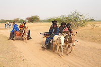 the Songhay men come backt o the village by charriots and camels in Sahel Burkina faso after a work  day