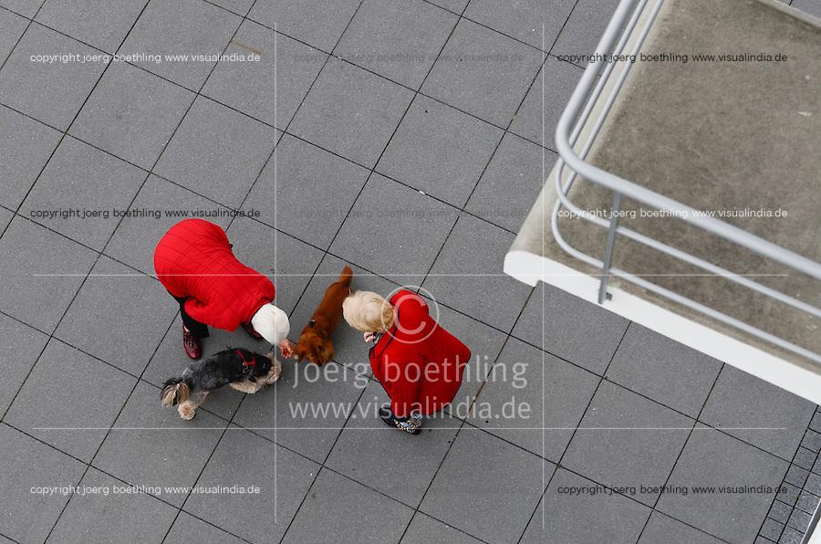 Germany, Dessau, dogs