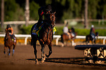 OCT 25: Breeders' Cup Classic entrant McKinzie, trained by Bob Baffert, under Humberto Gomez, gallops at Santa Anita Park in Arcadia, California on Oct 25, 2019. Evers/Eclipse Sportswire/Breeders' Cup
