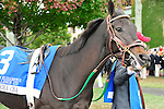 17 October 2009: Hot Cha Cha in the paddock before the G1Queen Elizabeth Stakes at Keeneland Race Course in Lexington, KY