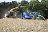 Whole crop rye being foraged for anaerobic digestion feedstock