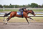 #107Fasig-Tipton Florida Sale,Under Tack Show. Palm Meadows Florida 03-23-2012 Arron Haggart/Eclipse Sportswire.