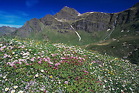 Wildflowers, blooming, Alps, Switzerland, June 1995