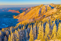 Frosted trees and desert below, Manti-La Sal National Forest, Utah, Colorado River Canyons near Moab