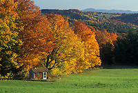fall, Peacham, VT, Vermont, A small hunting cabin surrounded by colorful fall foliage in the autumn.