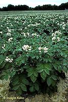 HS05-023b  Potato -field of potato plants in flower
