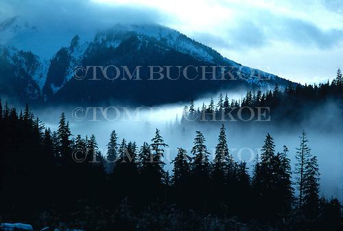 Fog bank moves through a valley near Ketchikan, Alaska.