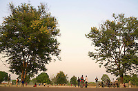 A late afternoon in a village on the route to Ngaoundal. It's the time of day when the trees again begin producing nectar, interrupted during the hours of intense heat.
