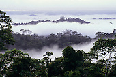 Amapa State, Brazil. Tumucumaque National Park, Amazon; overview of rainforest in the early morning with mist.