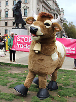A fake US President Donald Trump, a pantomime cow and people dressed as chickens at the<br /> Stop Trump, Stop the post Brexit Trade Deal protest in Parliament Square. Action against the NHS being opened up permanently to American healthcare companies. Chlorinated chicken AND hormone-laced beef and lowering of food standards. Plus the forced deregulation of  environmental laws and our rights to data privacy. Westminster, London on Saturday October 24th 2020