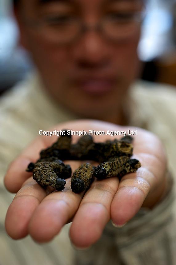 Professor Nonaka Kenichi of Tokyo's Rikkyo University holds dried larvae, Tokyo, Japan.