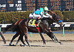 6 March 2010: Wallstreet Wonder and jockey Channing Hill win The Toboggan at Aqueduct Racetrack in Ozone Park NY.