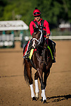 LOUISVILLE, KY - MAY 02: Classic Empire, with exercise rider Martin Rivera, walks to the track at Churchill Downs on May 02, 2017 in Louisville, Kentucky. (Photo by Alex Evers/Eclipse Sportswire/Getty Images)