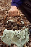 Europe/France/Midi-Pyrénées/46/Lot/Vallée du Lot/Env Cahors: La recherche des truffes - Détail panier de truffes