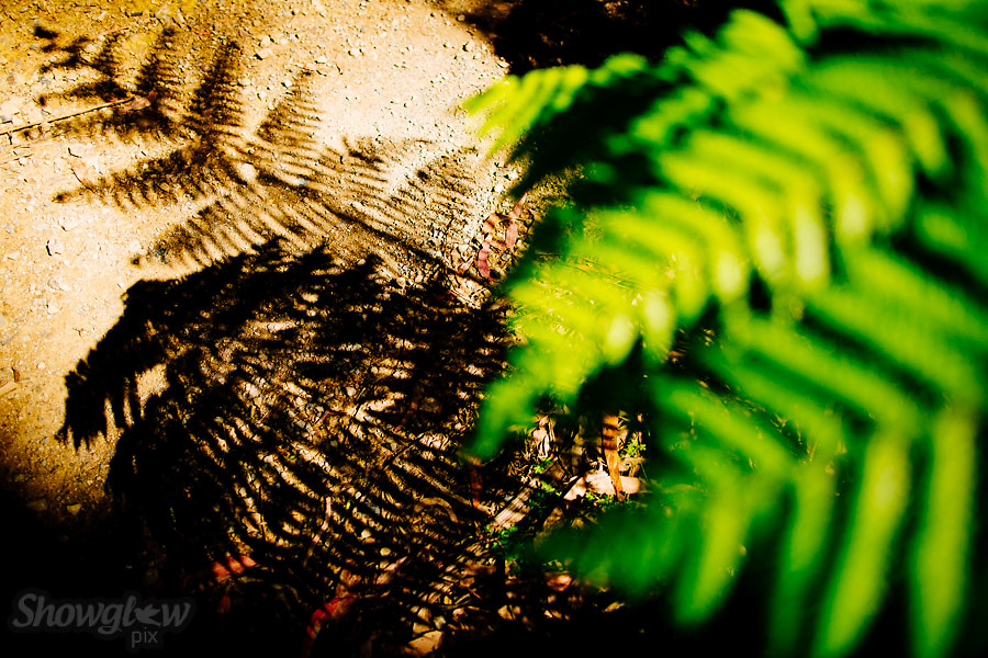 Image Ref: YV189<br /> Location: Toolangi State Forest<br /> Date: 03 Jan 2015