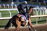 Nazuna, trained by Roger Varian, exercises in preparation for the Breeders' Cup Juvenile Fillies Turf at Keeneland 11.03.20.