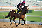 DUBAI,UNITED ARAB EMIRATES-MARCH 29: Lancaster Bomber,trained by Aidan O'Brien,exercises in preparation for the Dubai Turf at Meydan Racecourse on March 29,2018 in Dubai,United Arab Emirates (Photo by Kaz Ishida/Eclipse Sportswire/Getty Images)