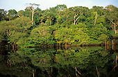 Anavilhanas, Amazonas, Brazil. Rainforest river bank reflected in the water of the river.