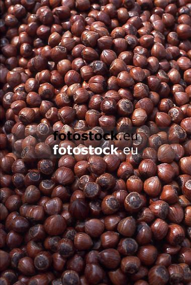 Hazelnuts<br /> Avellanas<br /> Haselnüsse<br /> <br /> Original: 35mm slide transparency