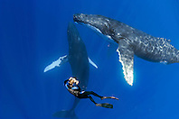 photographer and humpback whales, Megaptera novaeangliae, female and male whales in courtship, Hawaii, Pacific Ocean, MR, Model Released