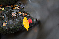 Autumn Leaves at Goit Stock Falls in Yorkshire, United Kingdom