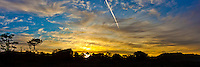 Panoramic-cropped image of a sunrise sky with orange and gold clouds, a contrail and trees in silhouette as the sun begins to peek through.  Bean Hollow State Beach south of San Francisco on California's coast.