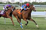 June 28, 2014:  Hey Leroy (KY) with jockey Luis Saez on board wins race 7 at Gulfstream Park in Hallandale Beach FL. Liz Lamont/ESW/CSM